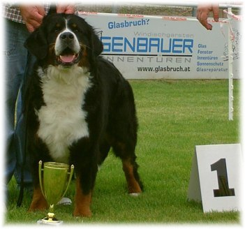 ALPENLIEBE  1� Ecc , Cac , Best Female , BOB